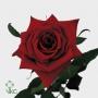 ROSA GRAND PRIX