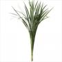 T-GRASS